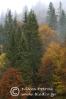 Norway spruce forest