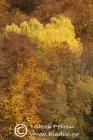 Autumn colours in Vathirema ravine